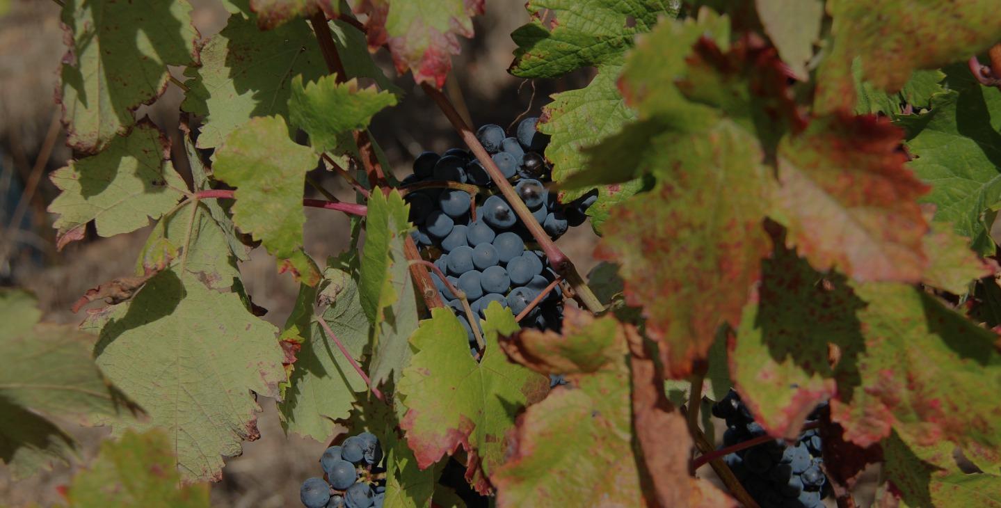 Outeiros Altos Vinho Alentejo Biológico